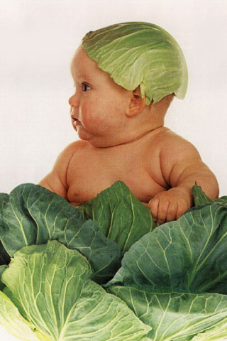 cabbage-baby